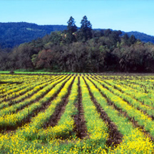 Napa Valley Stock Images by Nanci Kerby