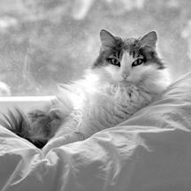 Seymour-McIntosh Pets