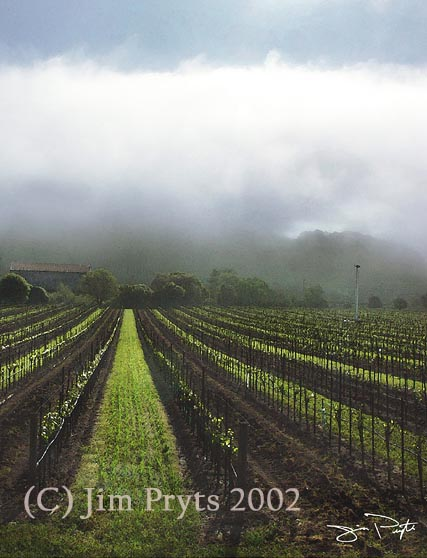 Fog clearing on Old Sonoma Road (c) Jim Pryts, 2002 All Rights Reserved