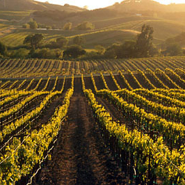 scenic and landscape photography in napa california